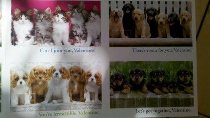 Puppy Valentines Cards