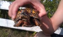 rescue turtle