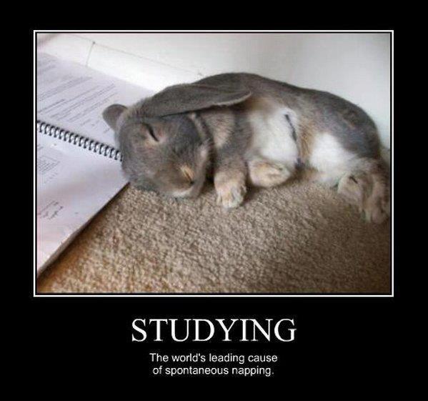 Napping bunny